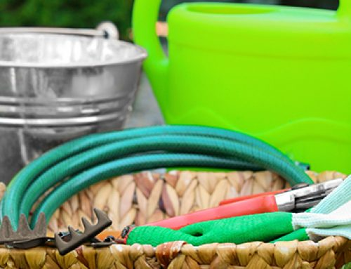 Irrigation Without Irritation: 3 Easy DIY Plant Watering Systems