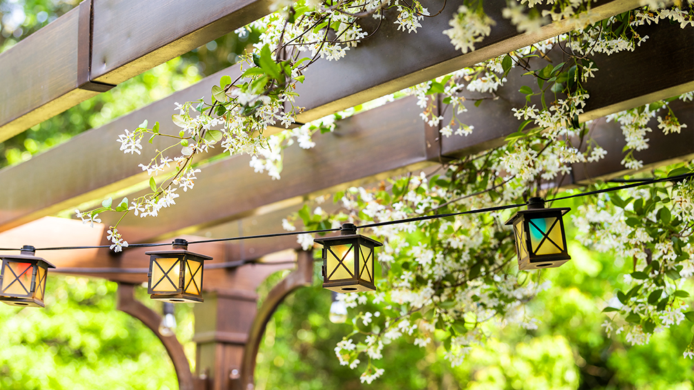 pfas-patio-design-ideas-pergola-with-vines-and-lights