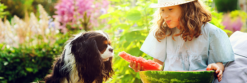pfas-houston-summer-guide-header-girl-dog-watermelon