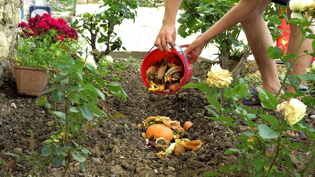 pfas-vegetable-garden-fall-crops-compost