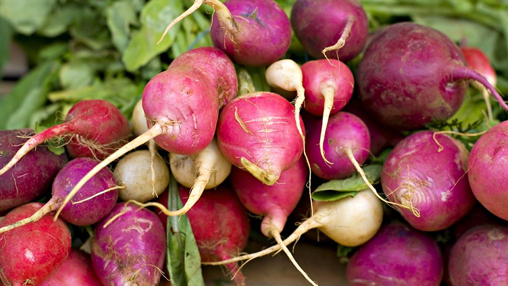 pfas-vegetable-garden-fall-crops-radishes-turnips