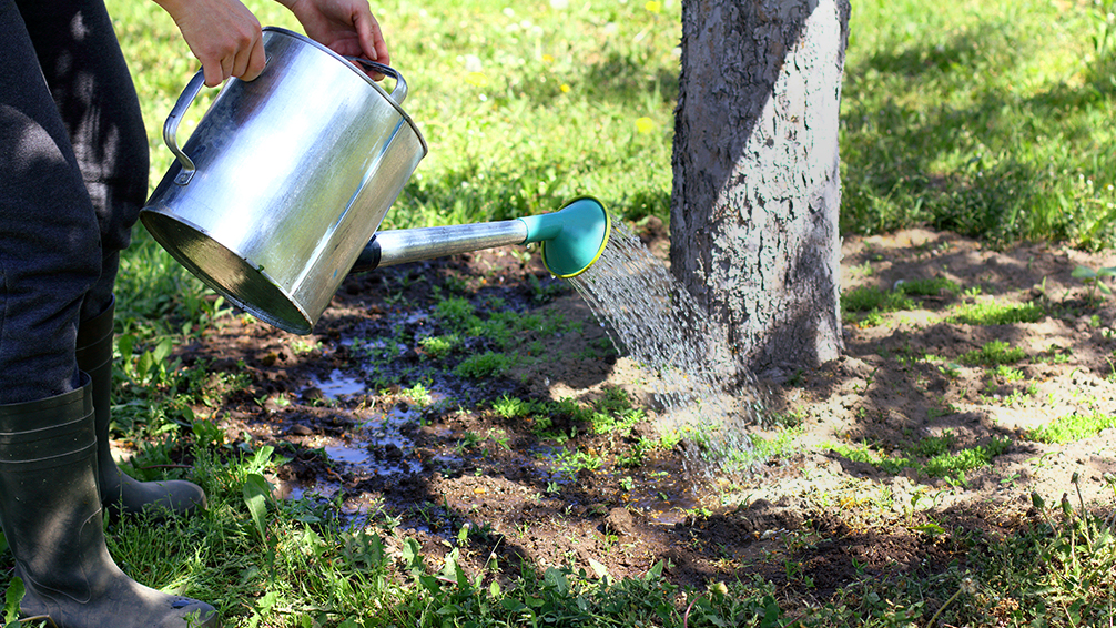 plants-for-all-seasons-watering-trees-shrubs-mature-tree