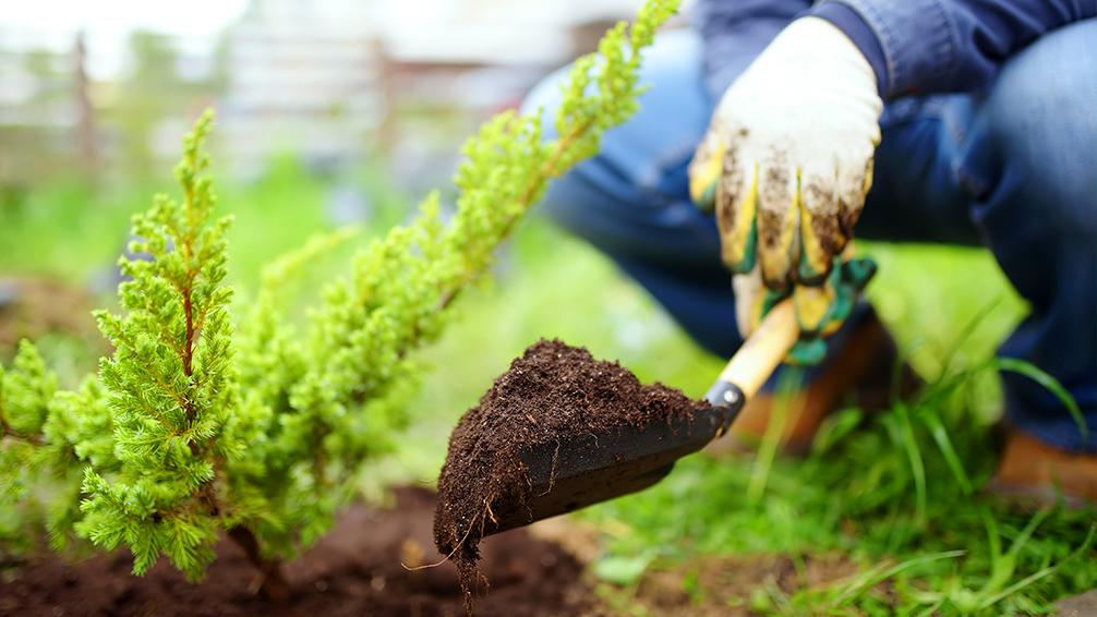 plants-for-all-seasons-watering-trees-shrubs-planting-soil