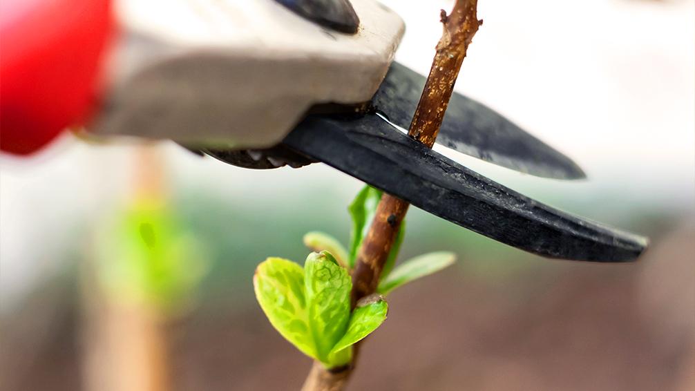 PFAS-fall-winter-garden-preparation-perennial-trimming