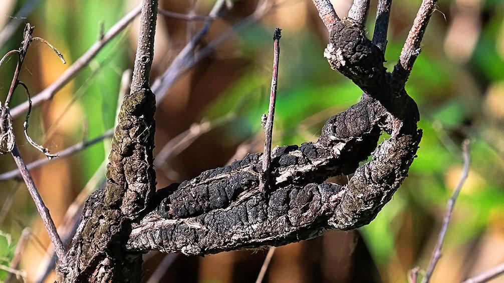 PFAS-fall-winter-garden-preparation-tree-disease