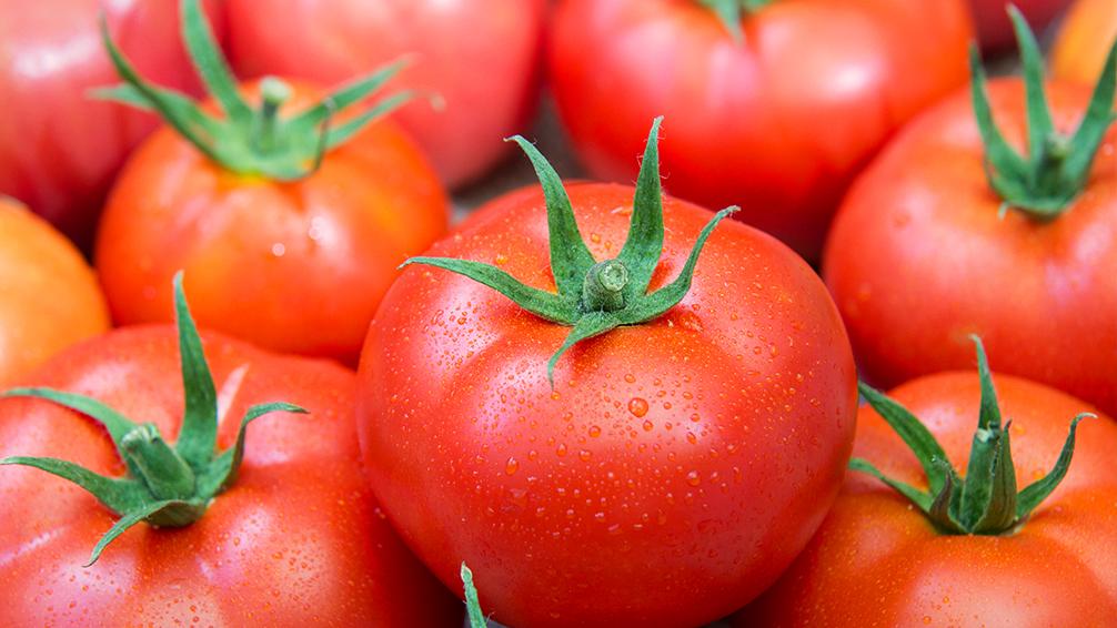 PFAS-tasty-fall-tomatoes-celebrity