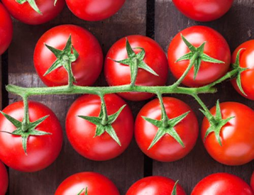 The 4 Tastiest Tomatoes to Grow this Fall