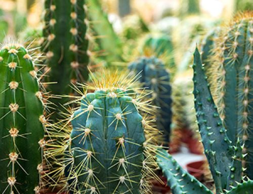 Collect All 6 Of These Cute And Colorful Cacti!