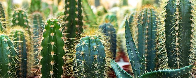pfas-collect-colorful-cute-cacti-header
