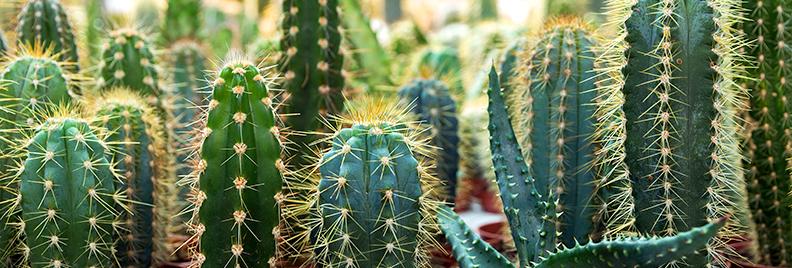 pfas-collect-colorful-cute-cacti-header