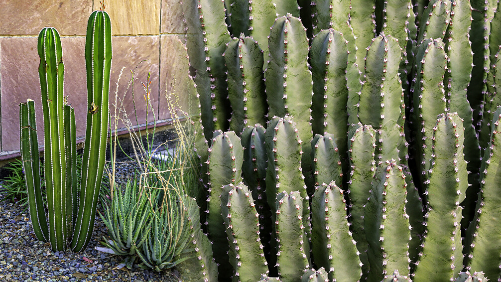 pfas-theme-garden-zodiac-sign-desert-garden-cacti