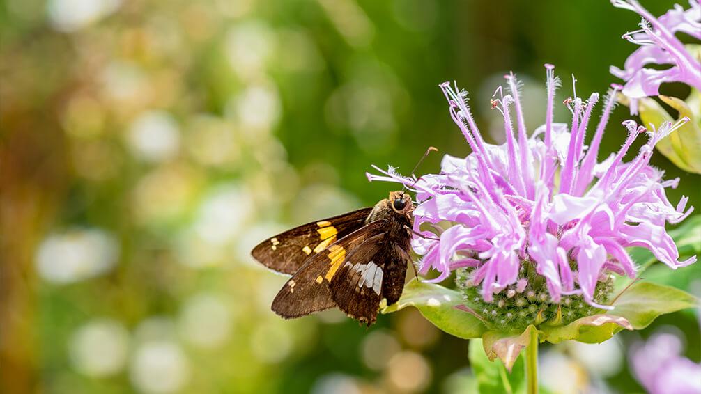 pfas-theme-garden-zodiac-sign-pollinator-garden-flower-butterfly