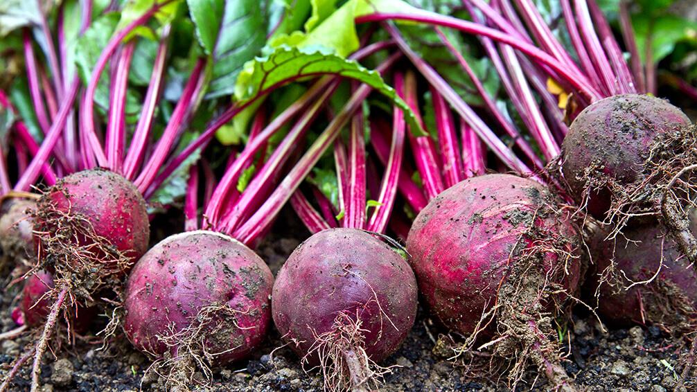 PFAS-fall-garden-veggies-beets