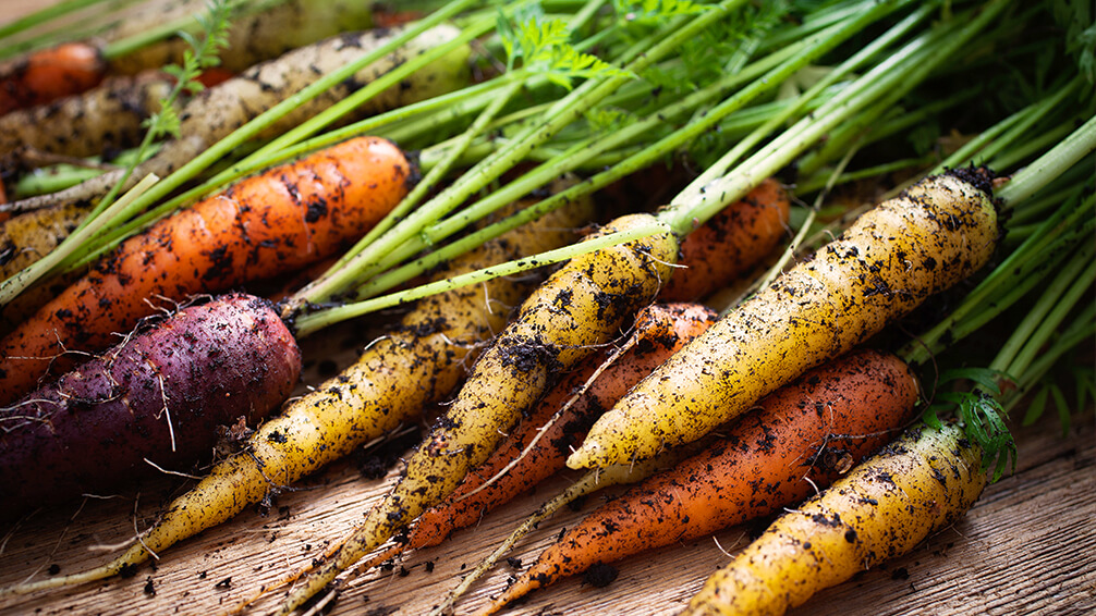 PFAS-fall-garden-veggies-rainbow-carrots