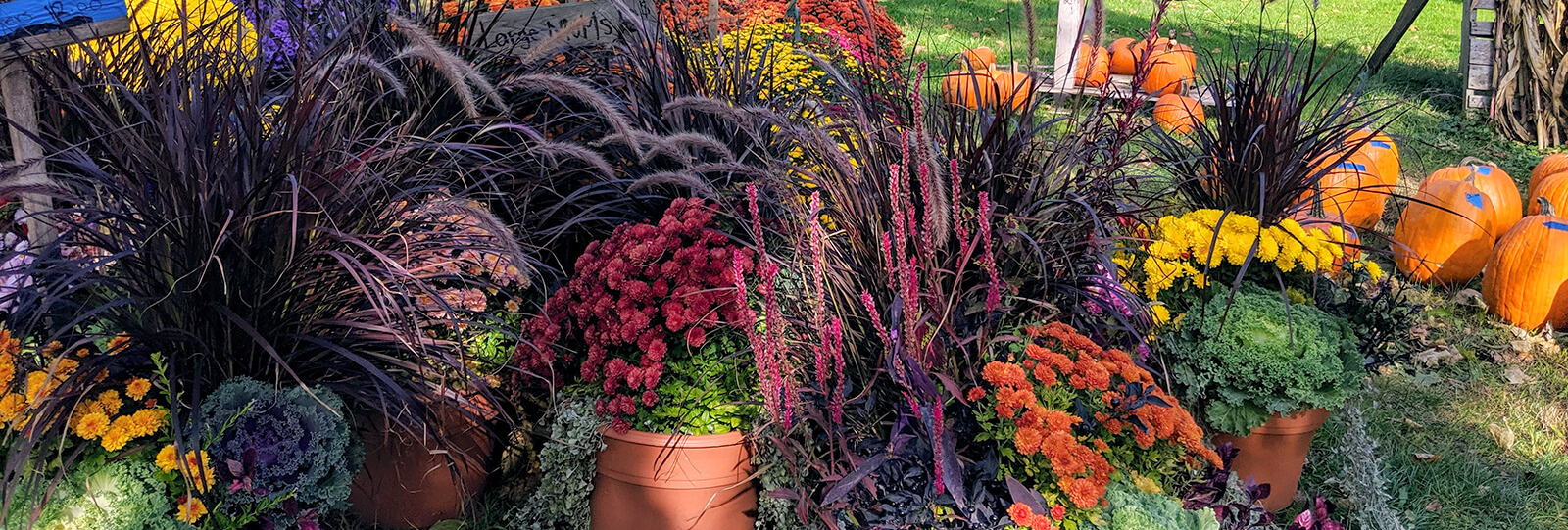 PFAS-fall-planter-boxes-autumn-potted-plants