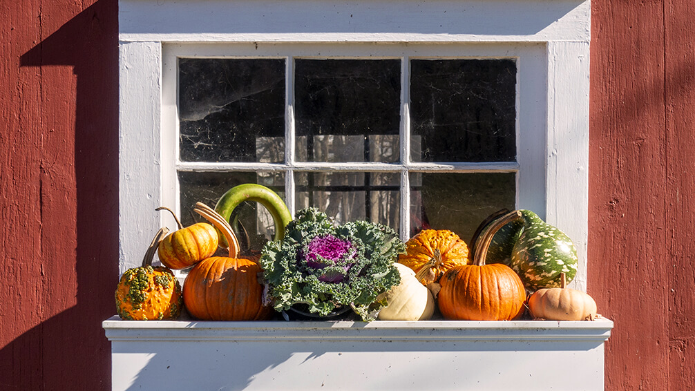 PFAS-fall-planter-boxes-ornamental-kale-gourds-window