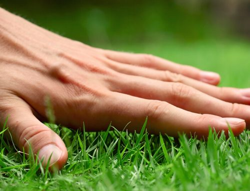 Our Expert Tips for Treating Brown Patch in Lawns