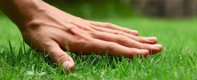 PFAS-treating-brown-patches-lawn-grass-hand-care