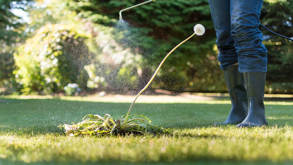 spraying herbicide on lawn