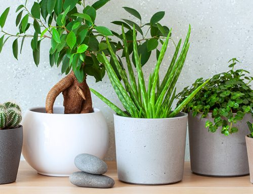 We Predict These 6 Garden and Houseplant Trends for 2021!