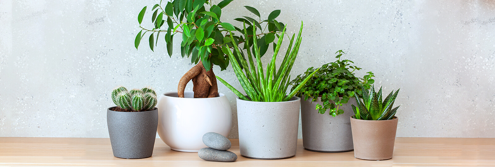 PFAS-2021-garden-houseplant-trends-modern-houseplants