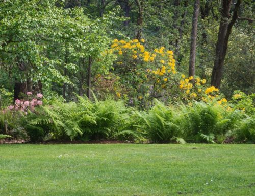 The Best Trees and Shrubs for Privacy Screening