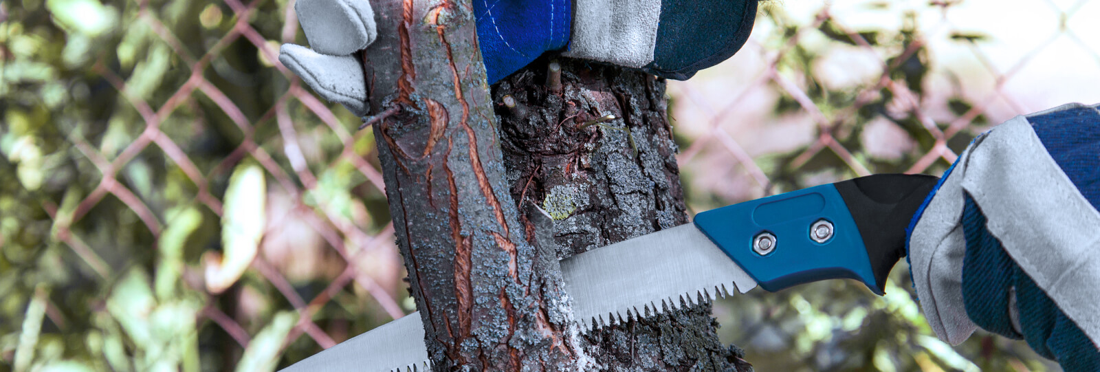PFAS-february-pruning-gloved-hands-saw-tree