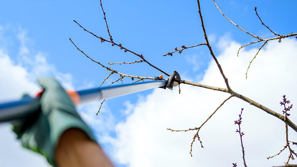 PFAS-february-pruning-pole-pruners-fruit-tree