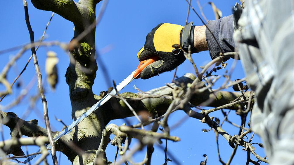 PFAS-february-pruning-tree-saw