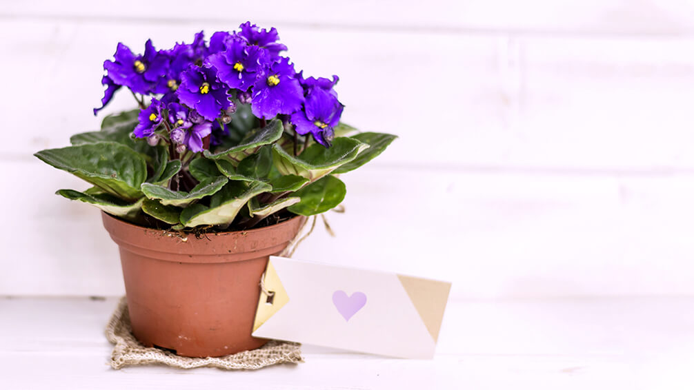 plants for all season alternatives-to-flowers-valentines african lily gift tag