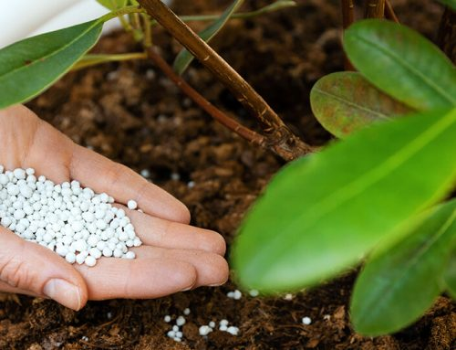 How to Fertilize Trees and Shrubs