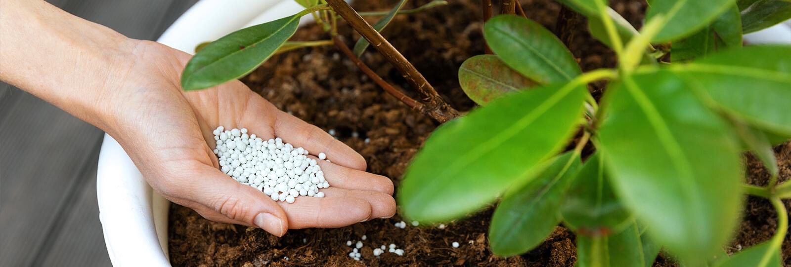 plants for all seasons fertilizing trees shrubs granulated fertilizer potted shrub