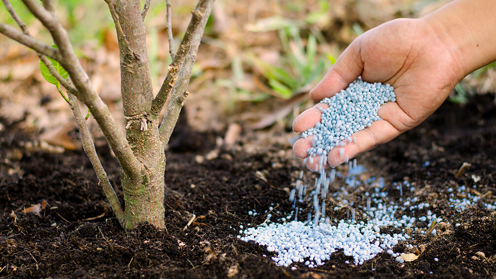 plants for all seasons fertilizing trees shrubs granulated fertilizer tree trunk