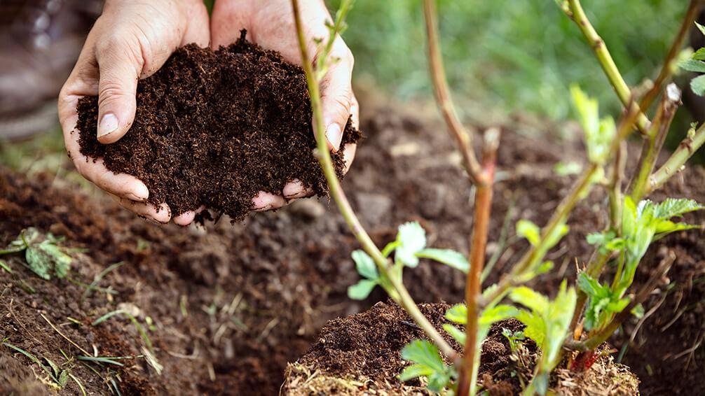 plants for all seasons fertilizing trees shrubs soil planting