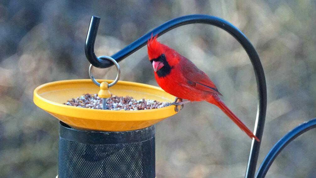 plants for all seasons bird wildlife care 2021 storm cardinal bird feeder
