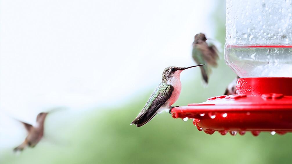 plants for all seasons bird wildlife care 2021 storm hummingbird feeder