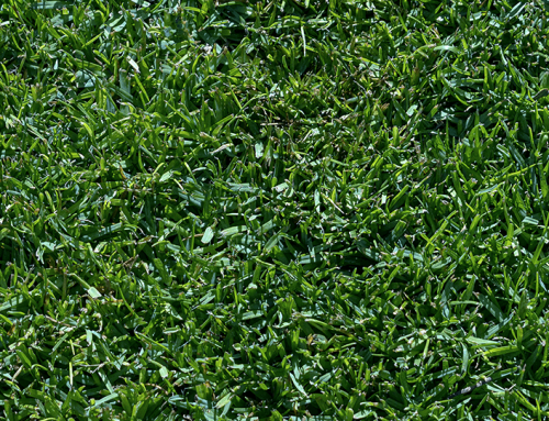 Turf Time: Late Spring Lawn Care Tips for Houston