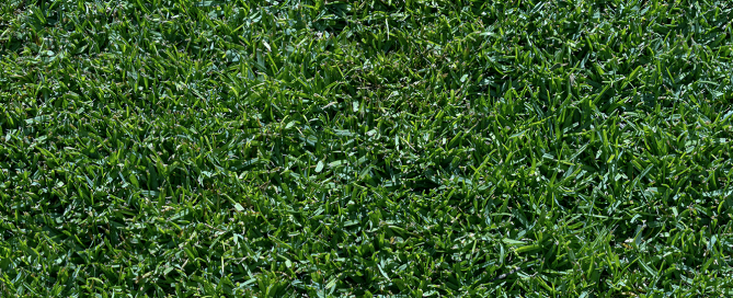 plants for all season late spring lawn care grass texture