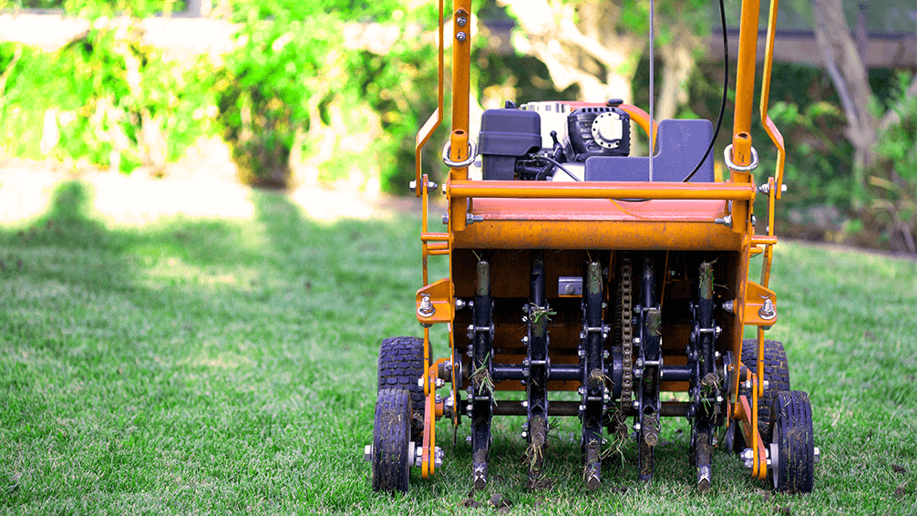 plants for all season late spring lawn care plug aerator