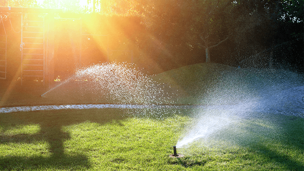 plants for all season late spring lawn care sprinklers in sunset